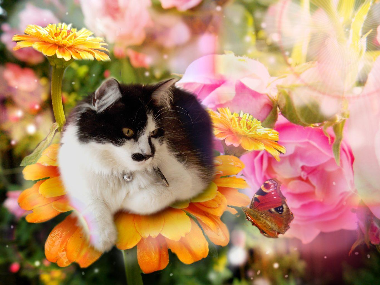 Flower Power for Pets(sm) Flower Essences Level I