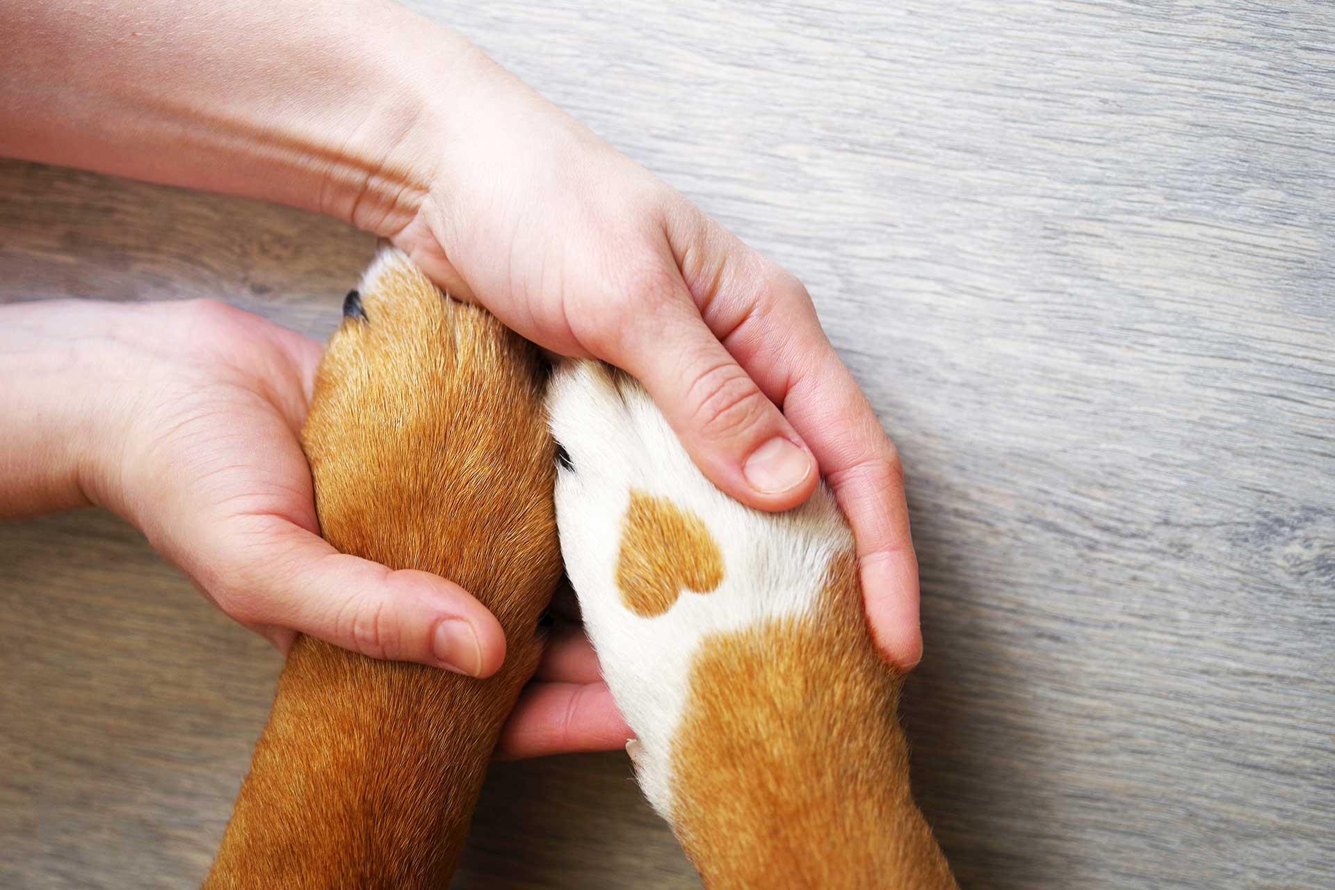 Professional Ethics for the Animal Aromatherapist